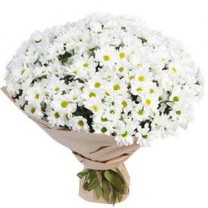 фото товара 51 ромашковая хризантема